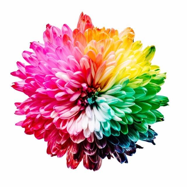 色彩豊かな花